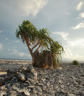 Vital Programme: Pacific Adaptation to Climate Change (PACC)